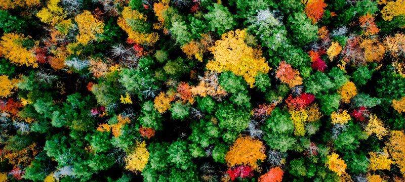 Aerial view of forest with fall colors.